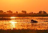 éléphant lors d'une croisière en Afrique Australe