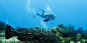 Cozumel plongee sous marine
