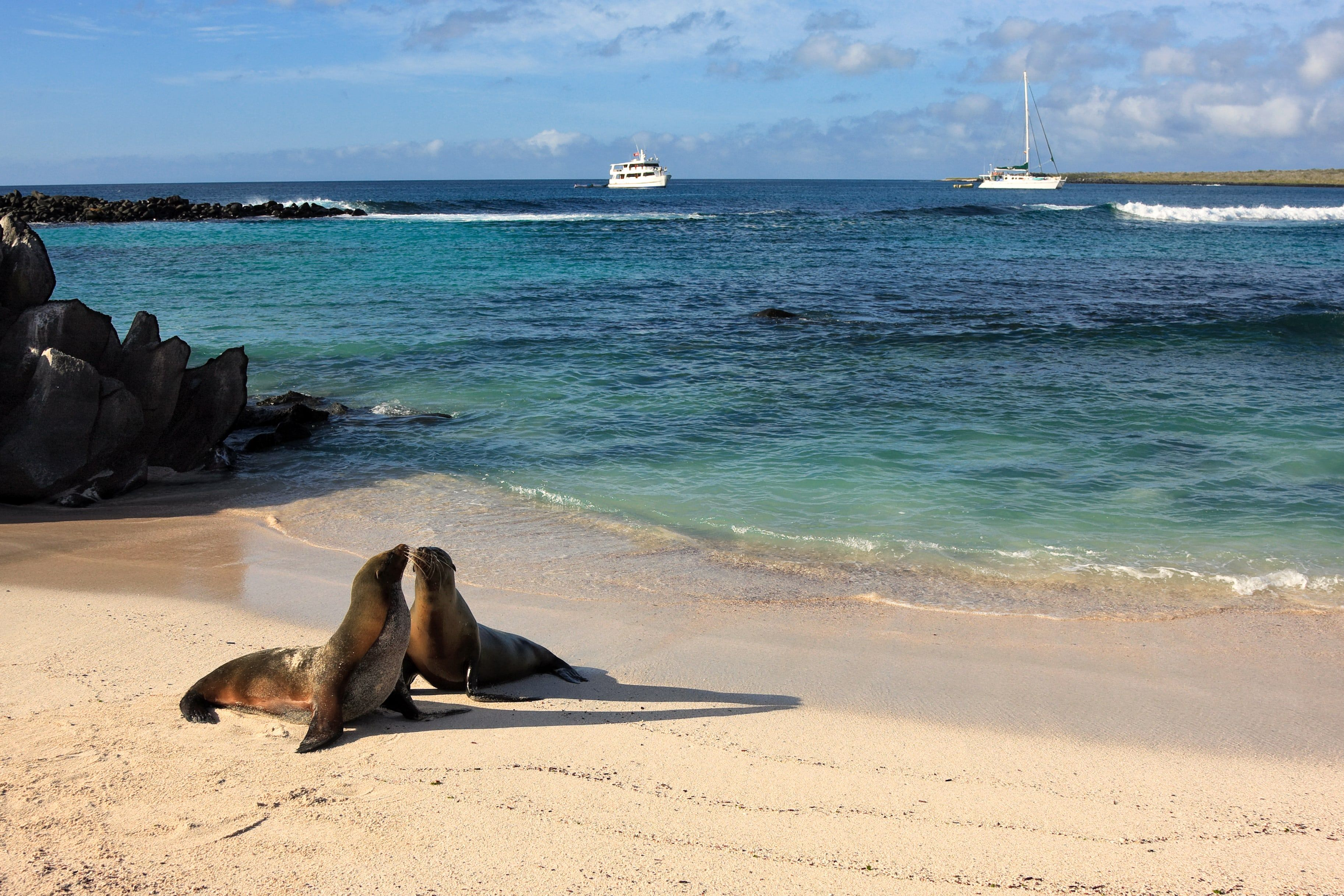 Les îles galapagos, un voyage de noces en croisière au plus proche de la nature